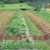 果树除草布防治污染环境,防草布好处减少农药的使用量