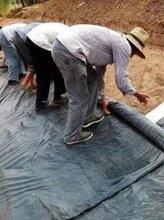 5000克納基防水毯德州賣膨潤土防水毯廠家圖片