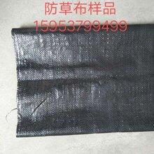 采购枸杞防草布要选对厂家_除草布质量放在首位图片