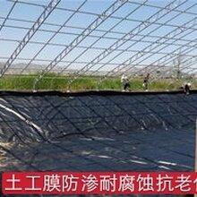 安徽复合土工膜品质优良,鱼塘土工膜图片