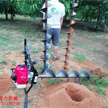 河北廊坊拖拉机挖坑机农网改造专用图片