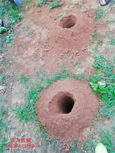 东营市新品地钻挖孔机图片