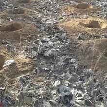 绍兴市厂家直销载杆钻坑机图片