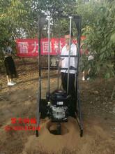 德阳市取土快又净种树挖孔机图片