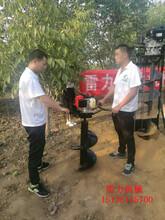 汽油式栽树挖坑机施肥钻孔栽树机器图片