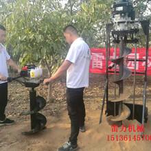 专业地钻种树必用挖坑机价格图片
