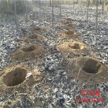 电网改造用水泥杆打洞机图片