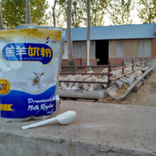 羔羊奶粉厂家直销全国包邮技术支持