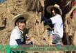 伊犁哈薩克犀牛駱駝草雕稻草人工藝品正品包郵量大從優