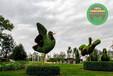 江陵五色草造型綠雕廠家供貨