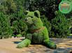 瓊中五色草造型綠雕哪家好?