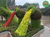 呈貢草皮植物綠雕哪里買