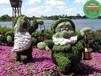 龙海仿真植物绿雕优势生产多图