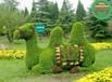 诏安立体花坛绿雕在线咨询价格