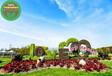 恩施州立體花壇立體綠化哪家好?