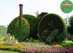 通遼五色草造型植物綠雕制作哪家好