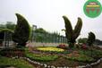 图片案例:泸西仿真动物绿雕口碑好质量保证厂家