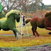 图片案例:温江立体花坛立体绿化经销商图片