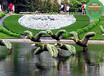 在线报价:东阳立体花坛绿雕哪里买