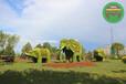 乌兰察布卓资五色草造型植物绿雕市场价格
