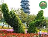 設計咨詢:邯山園林植物綠雕生產多圖