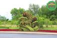 紹興越城假植物綠雕市場價格