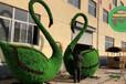 邵阳城步立体绿雕植物制作公司
