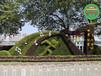 现场制作:工农立体绿雕植物怎么养护