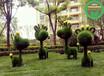 设计咨询:莱西立体绿雕植物制作哪里找