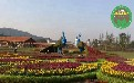 厂家信息:塔什库尔干塔吉克立体花坛绿雕定制
