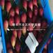 矮化紅蜜櫻桃樹苗報價、矮化紅蜜櫻桃樹苗價格是多少