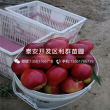 5公分血桃樹苗、5公分血桃樹苗價格圖片