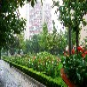 北京办公室花卉租赁公司