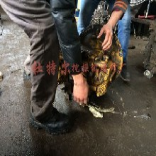 永平县加藤挖掘机维修抬大臂动作慢图片