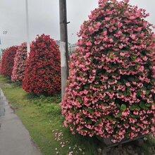 真植物绿雕养护,仿真绿植,草花立体花坛制作图片