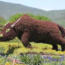 可爱的动物造型雕塑,鹦鹉孔雀等造型均可定制图片