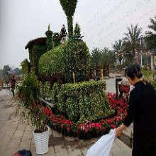 五色草立体花坛真植物的大型雕塑出售图片