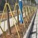 江西訂制建誠樹木支撐桿價格實惠,綠化樹木支撐架