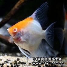 广州花地湾热带鱼批发、广州观赏鱼批发图片