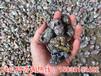 广东中山橡胶粉碎机价格