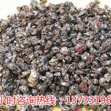 陕西榆林废家具破碎机产量更高图片