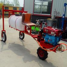 河南焦作大型優質三輪打藥機柴油款圖片