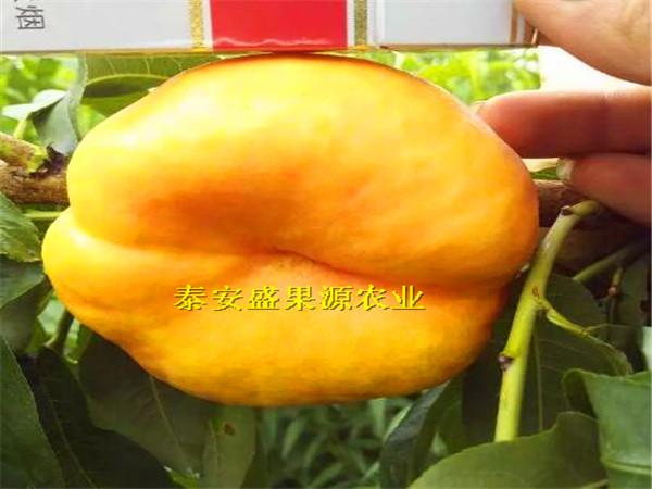 林口县现在嫁接桃树苗市场价格