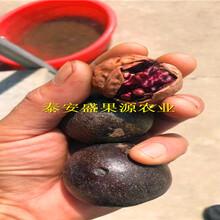 新青区新加工毛桃核种子供应图片