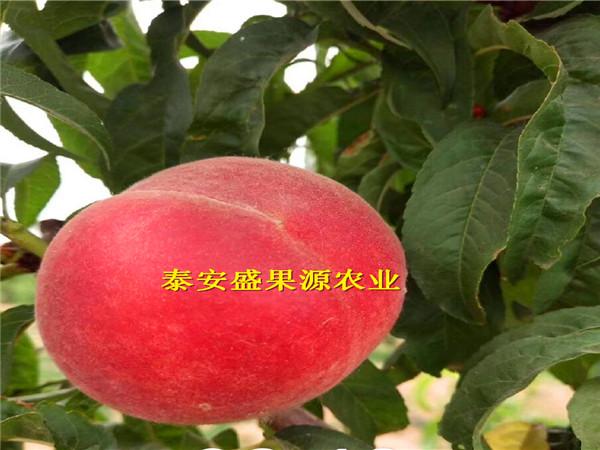 泰安盛果源农业