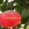 泰安盛果源农业科技有限公司(周梁)