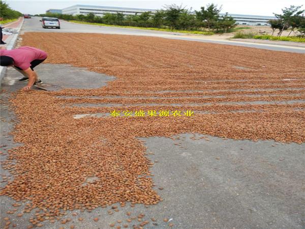 解放区毛桃籽一斤多少钱毛桃种子的价格