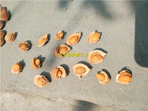 茶陵县桃籽格桃树种子价格