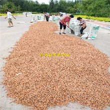 茶陵县桃籽批发价格桃树种子价格图片