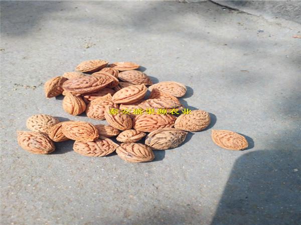 常熟桃籽批发商毛桃胡种子供应